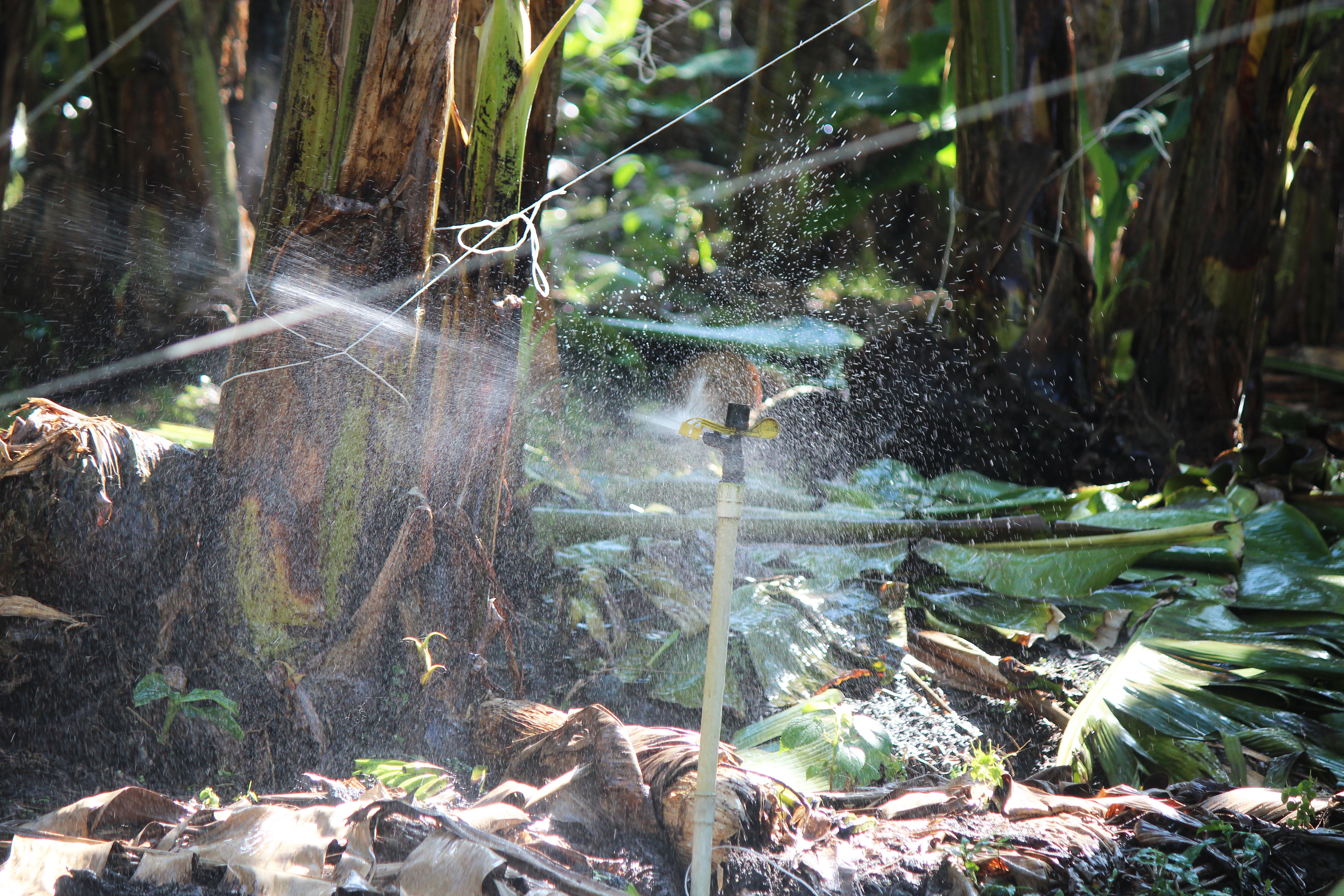 20 Series Impact Sprinkler - 2014 in Bananas