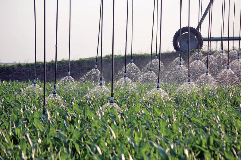 close-spacing-bubbler-shorud-corn-irrigation_2.jpg