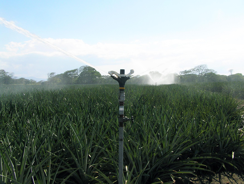 80 Series Impact Sprinklers - Sugarcane