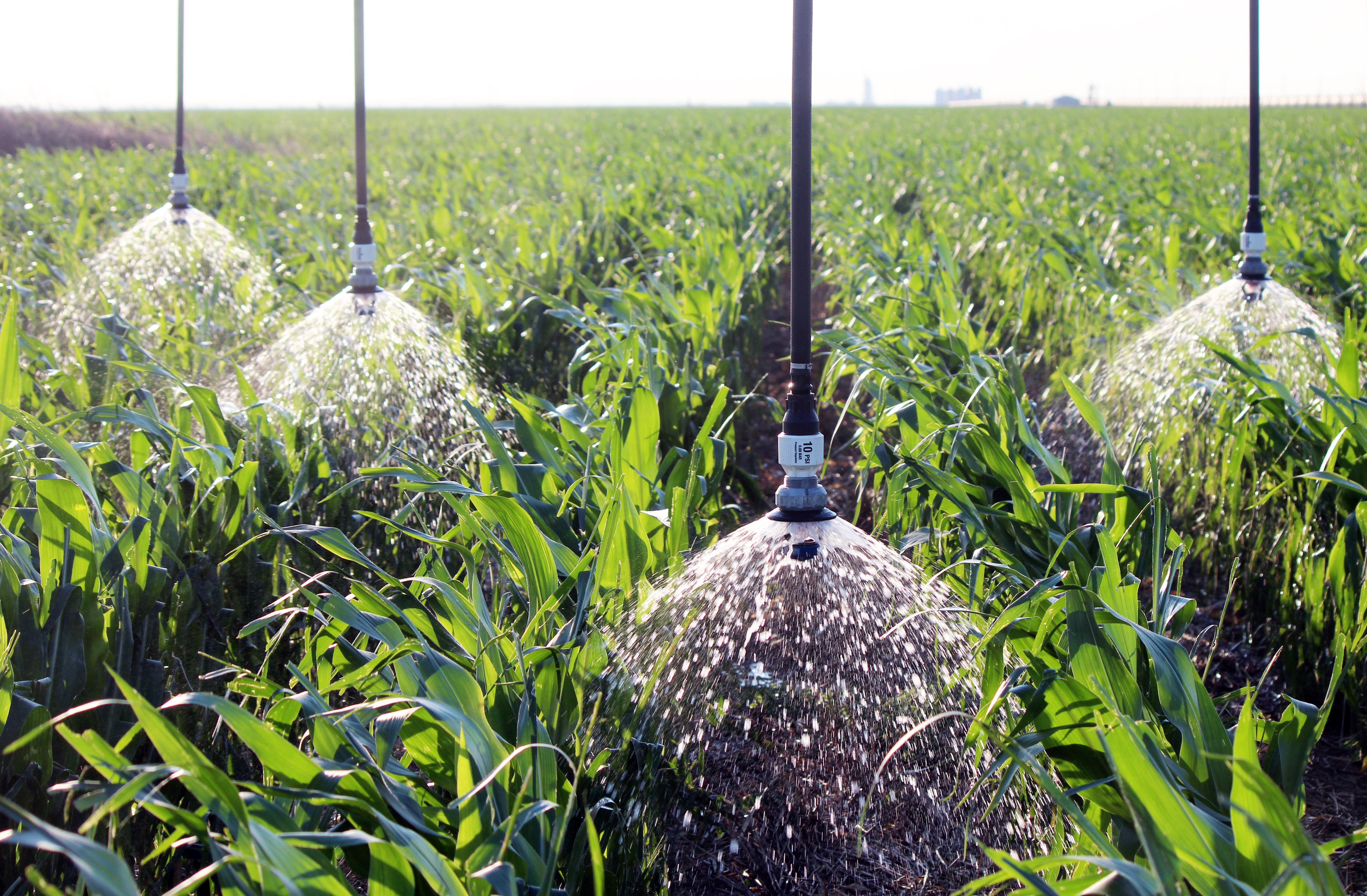 LDN LEPA Close Spacing - LDN Shroud in Corn