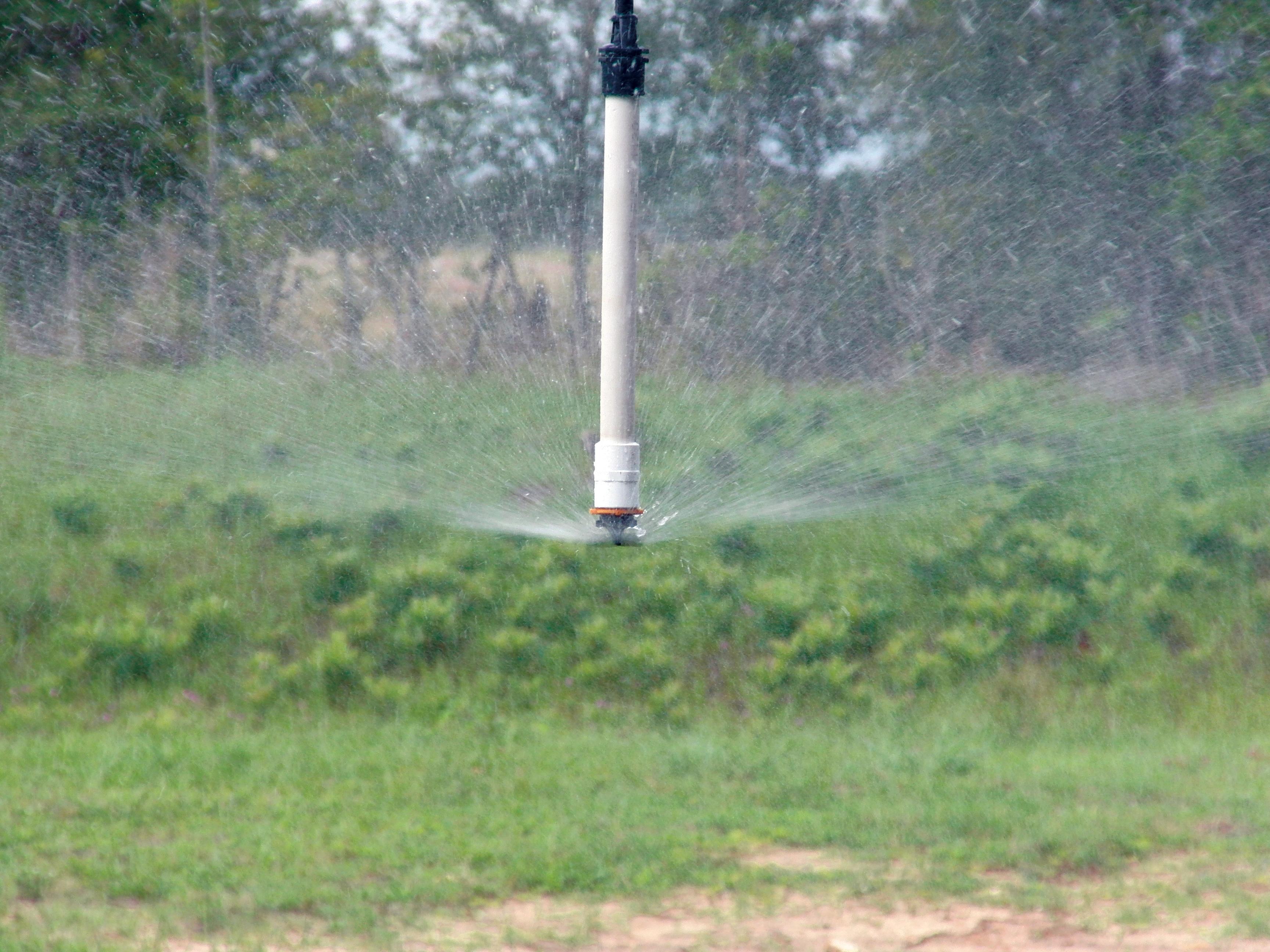 micro-sprinkler-inverted-irrigation.jpg