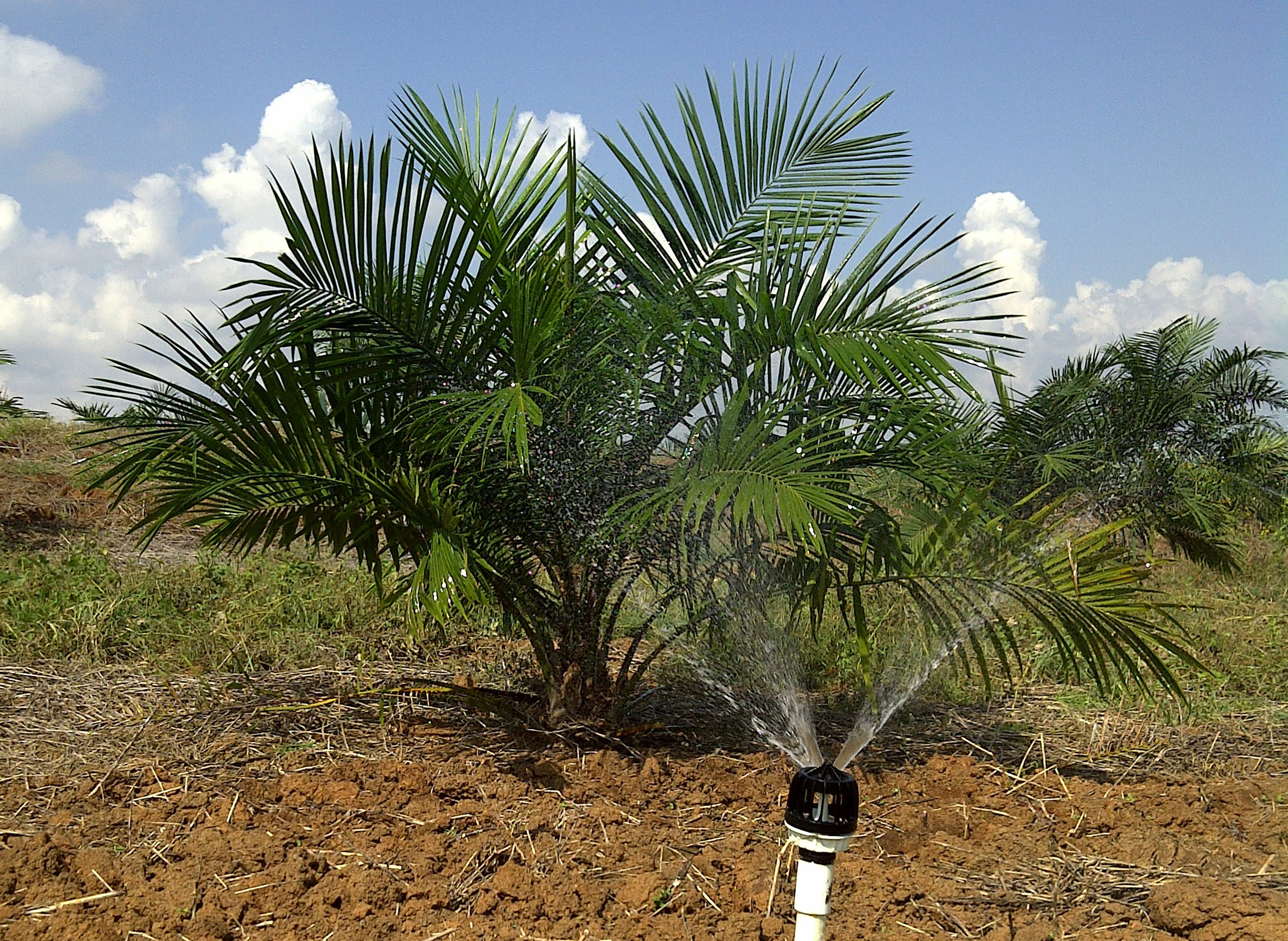Smooth Drive - Oil Palm
