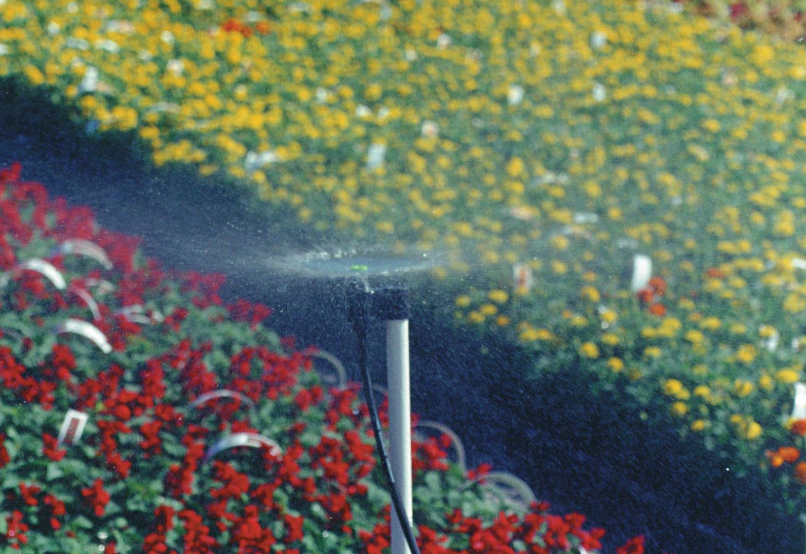t-spray-nursery-greenhouse-irrigation.jpg