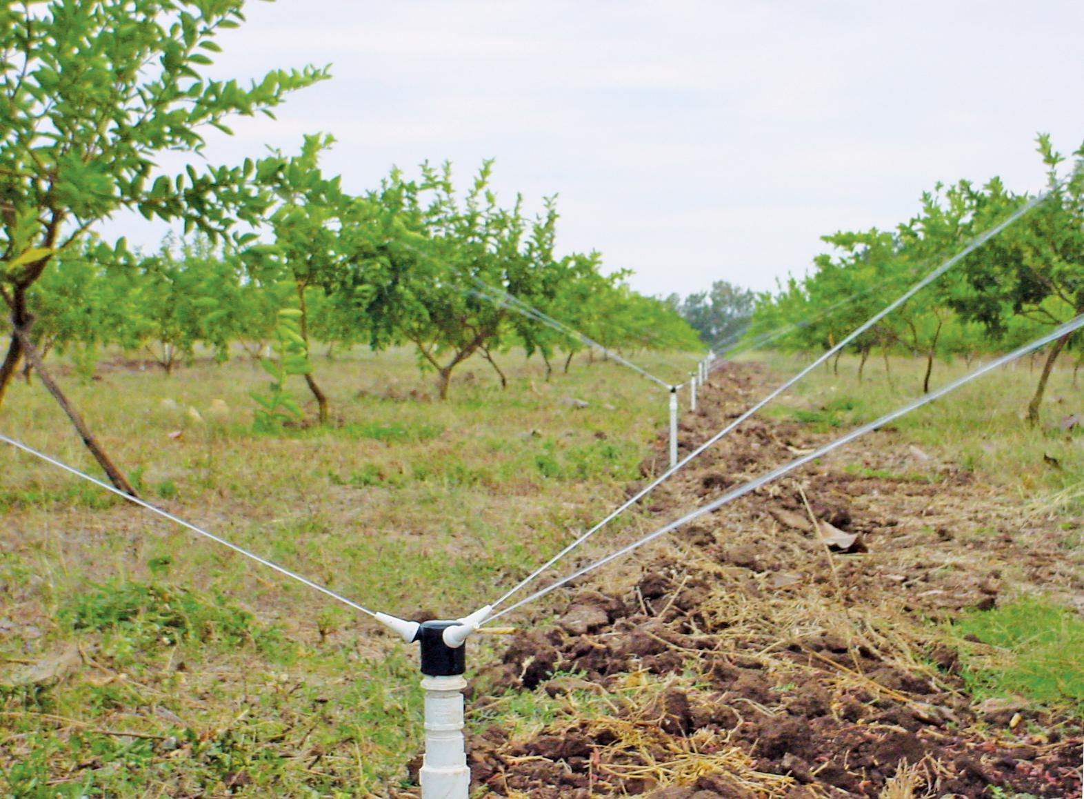triad-lime-irrigation.jpg