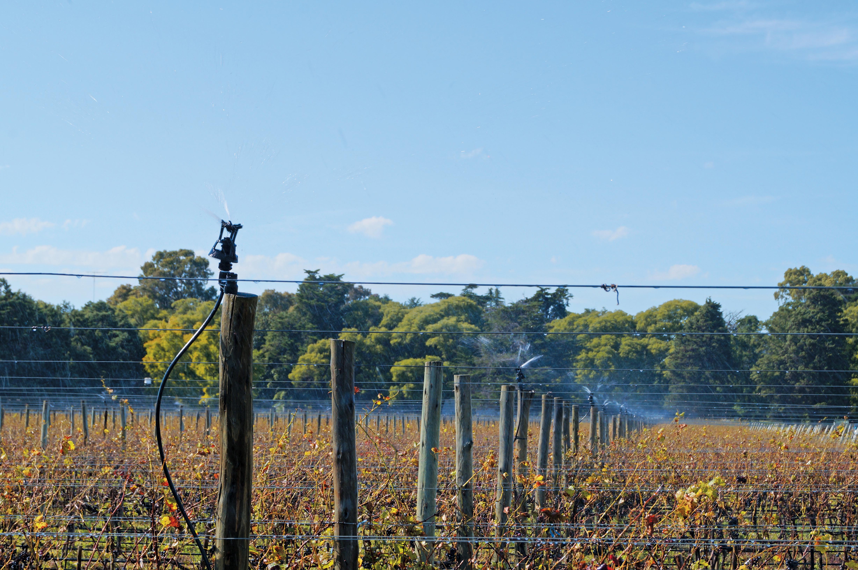 xcel-wobbler-vineyard-irrigation.jpg