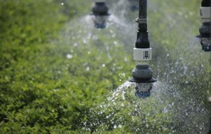 Close Spacing irrigation