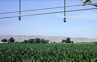 Low-pressure i-Wob2 sprinklers on a center pivot over corn