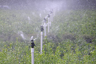 Low-pressure irrigation systems