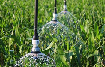Pressure Regulators and LEPA sprinklers