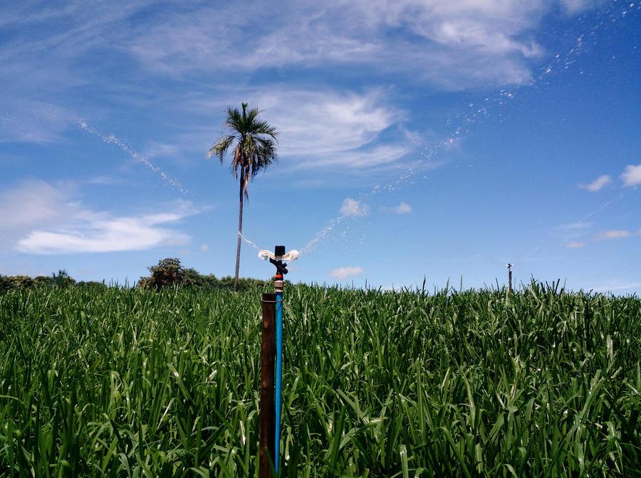 3023-impact-sprinkler-sugarcane.jpg