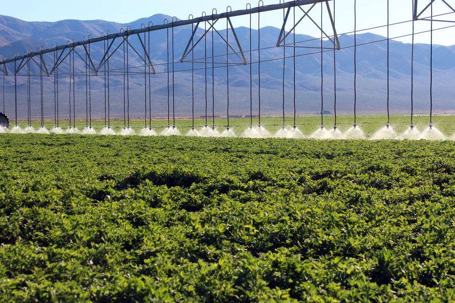 close-spacing-shroud-alfalfa-irrigation.jpg