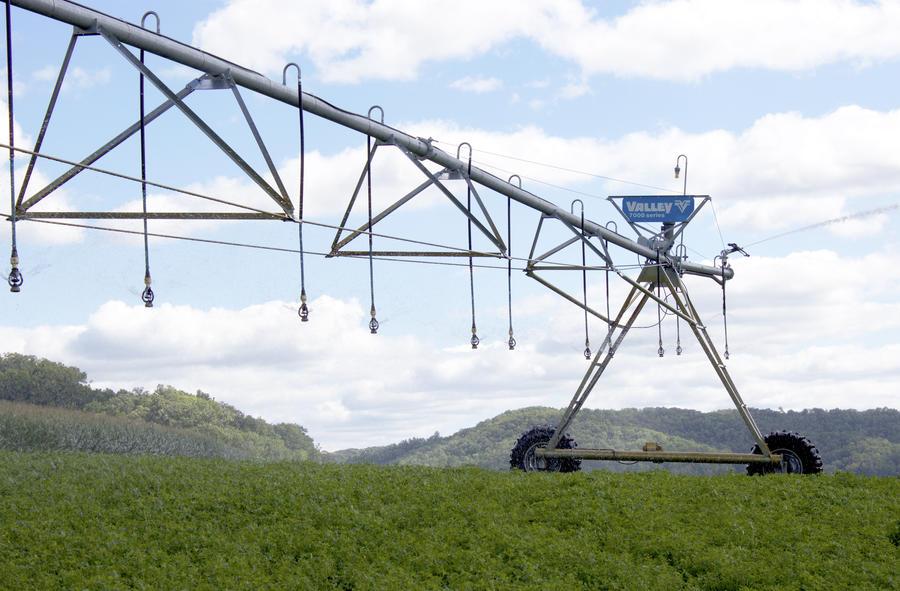 i-wob-irrigation-beans.jpg