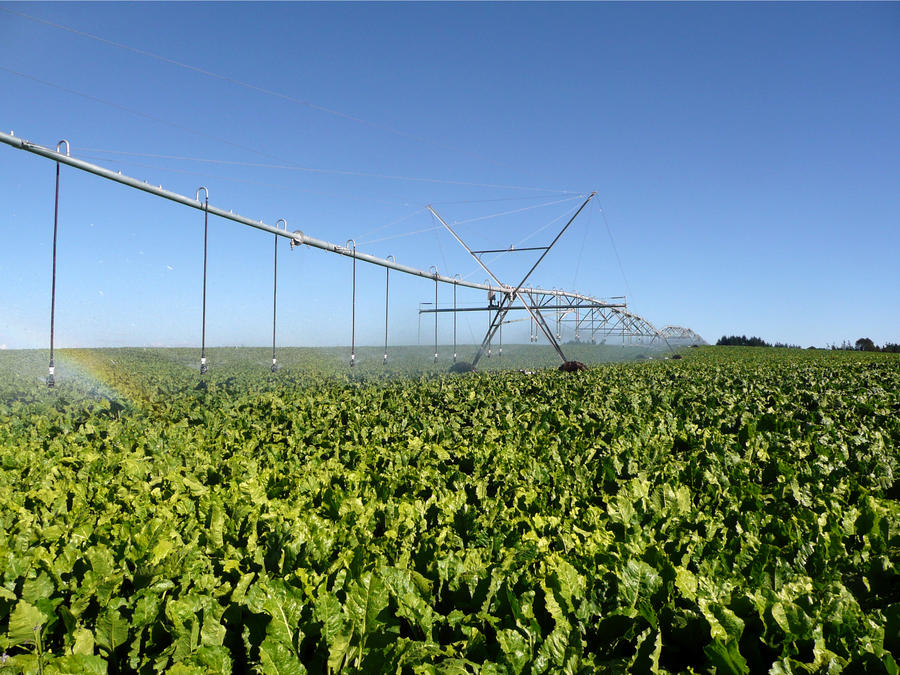 i-wob-irrigation-lettuce.jpg