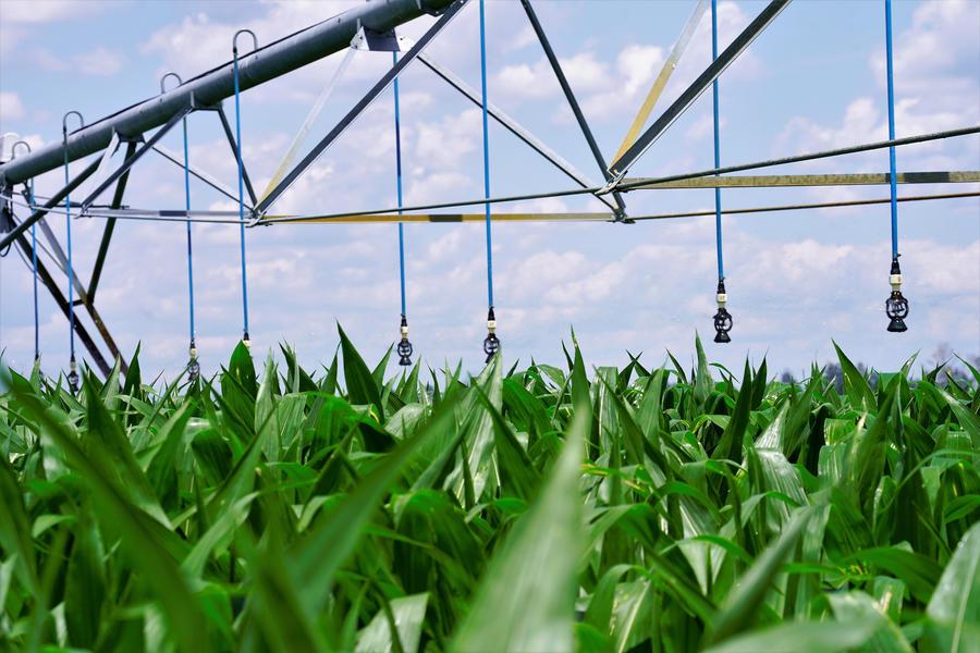 i-wob2-corn-florida.jpg