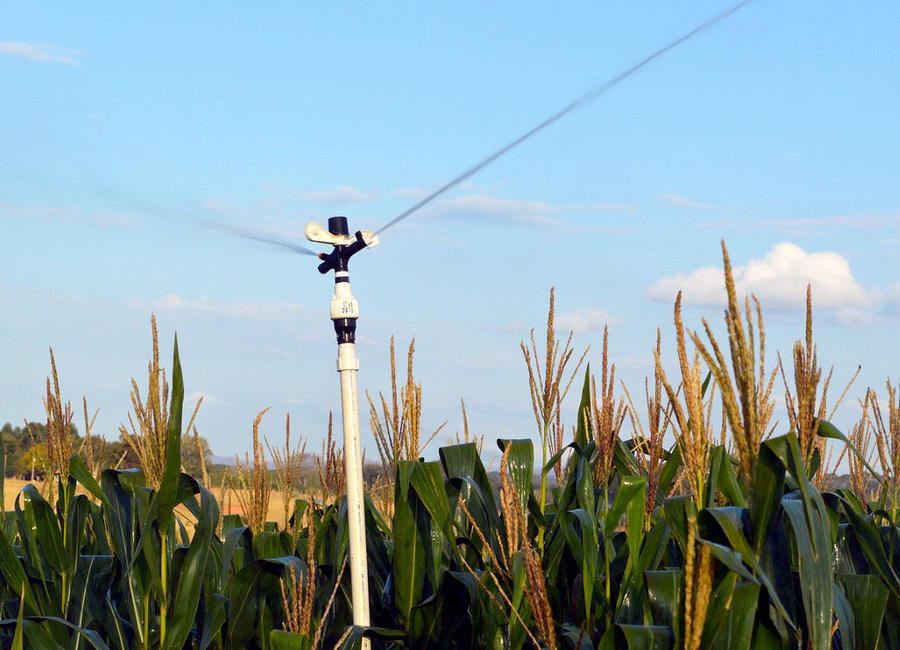 impact-sprinkler-4023-corn.jpg