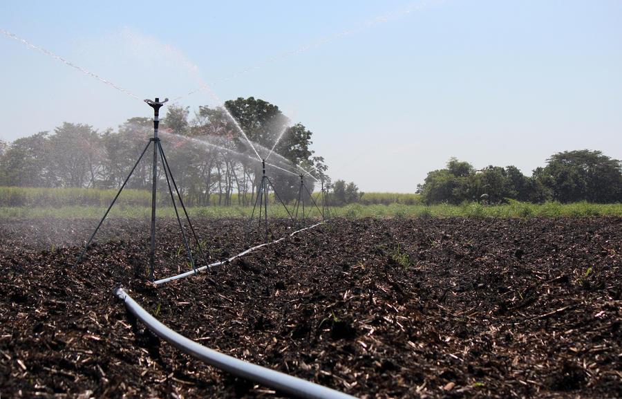 impact-sprinkler-8025-sugarcane.jpg