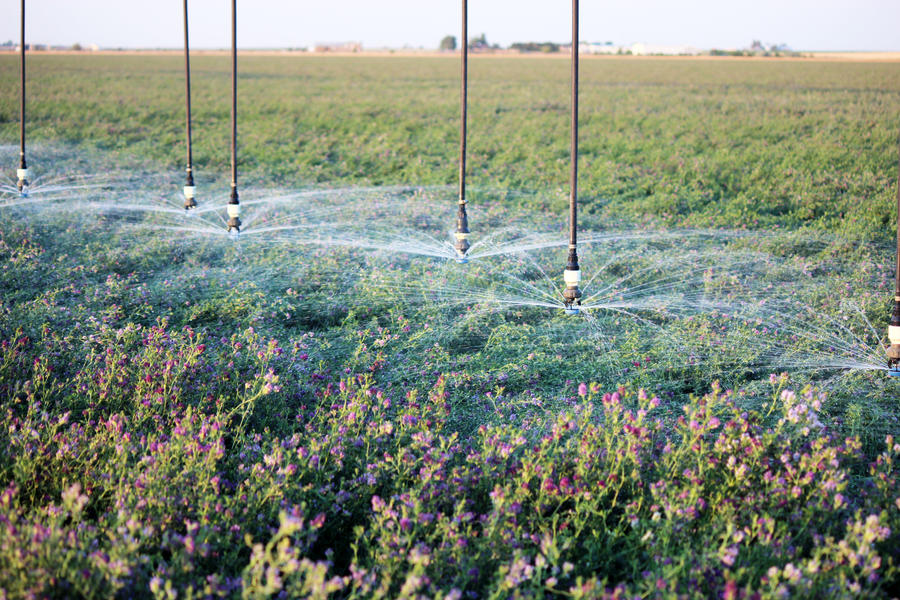 ldn-irrigation-alfalfa.jpg