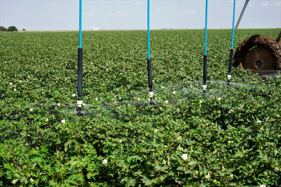 ldn-sprays-cotton-texas.jpg