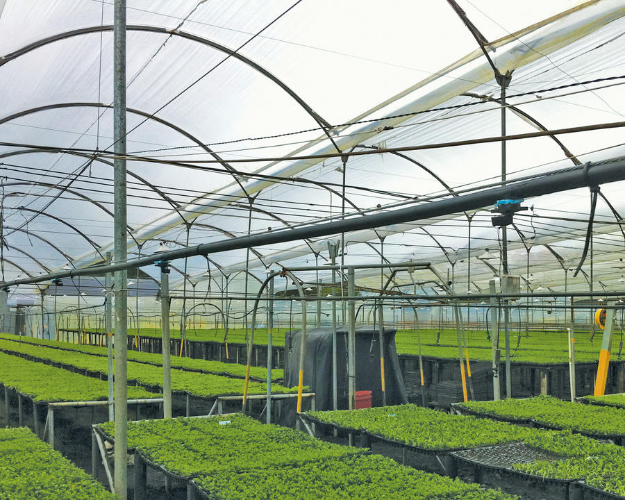 micro-sprinkler-inverted-greenhouse-irrigation.jpg
