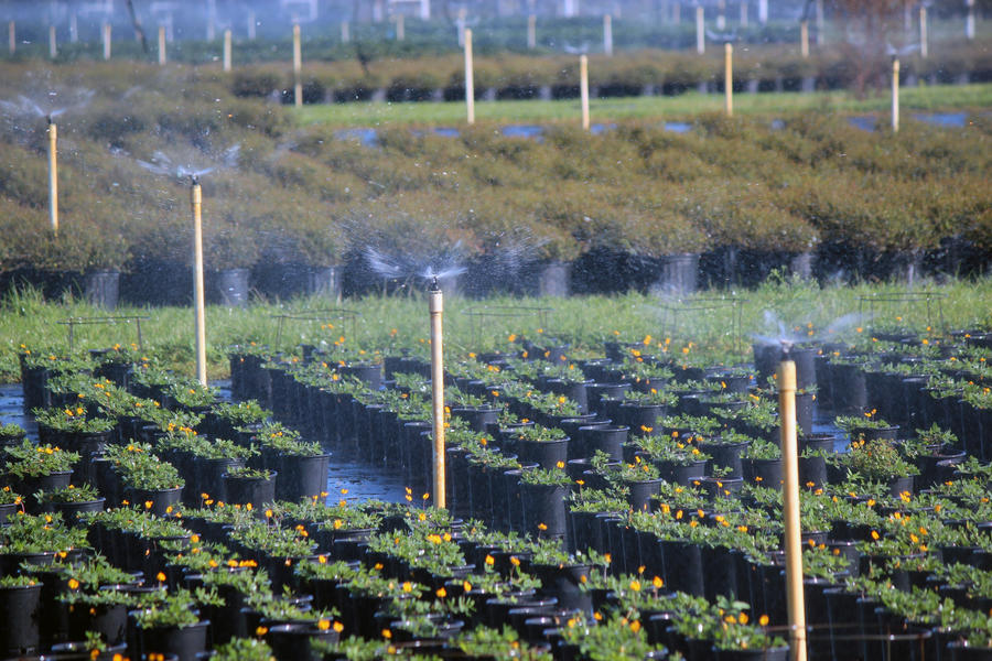 mini-wobbler-nursery-irrigation.jpg