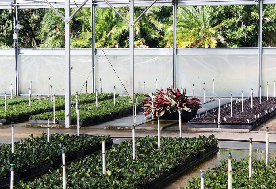 mister-sprinklers-greenhouse.jpg