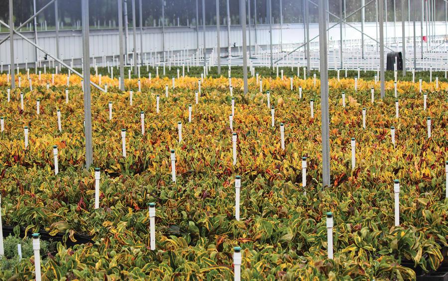 mister-upright-greenhouse.jpg