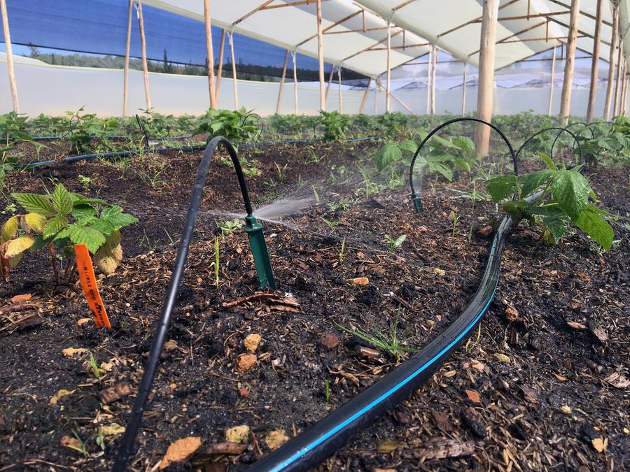 spray-stakes-greenhouse-irrigation.jpg