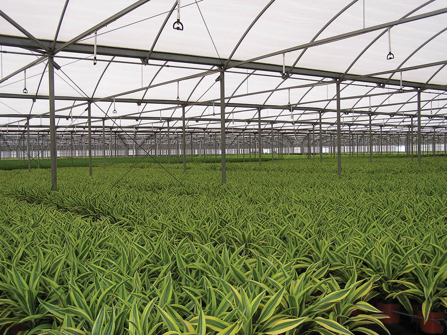 super-spray-greenhouse-irrigation.jpg