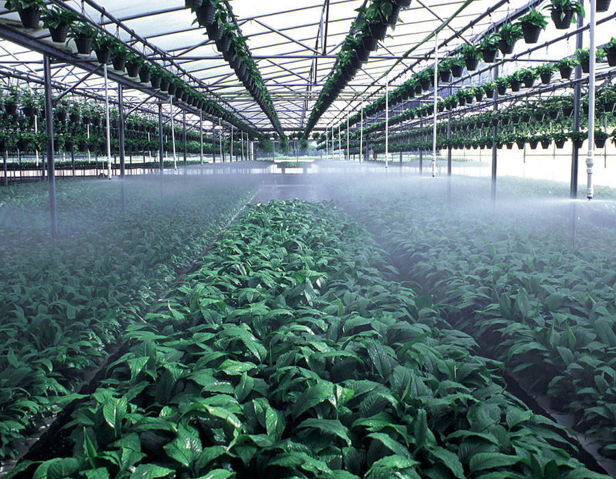 t-spray-greenhouse-nursery-irrigation.jpg