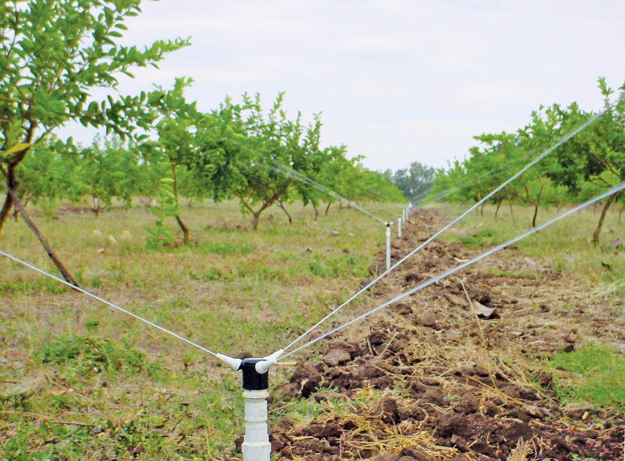 triad-lime-irrigation.jpg