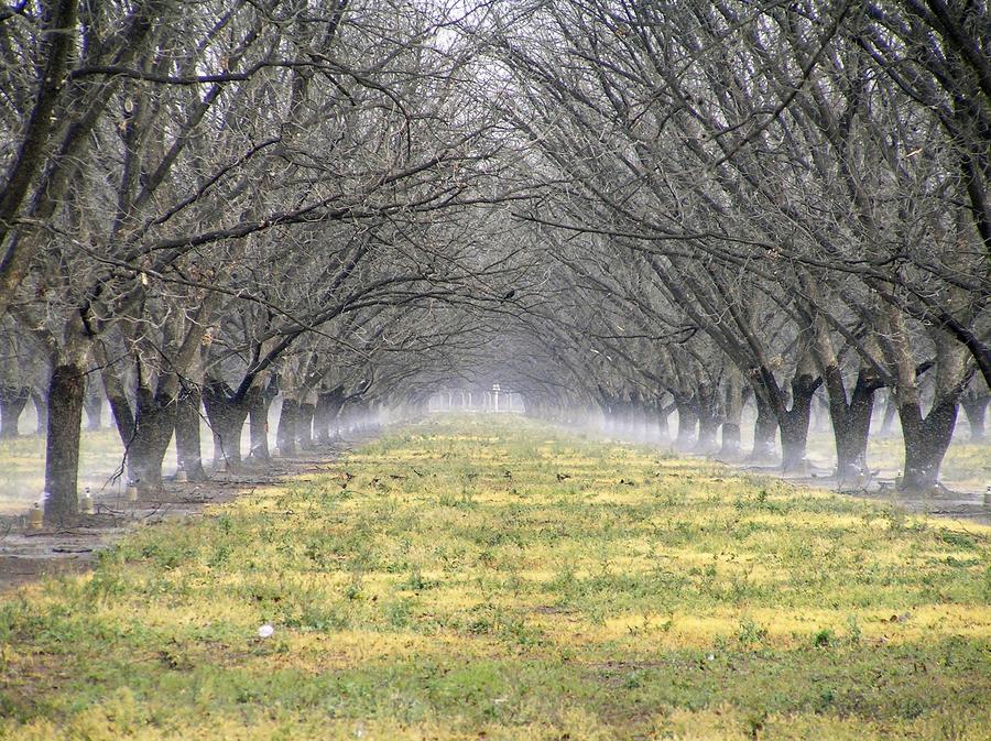 wobbler-sprinklers-walnuts.jpg