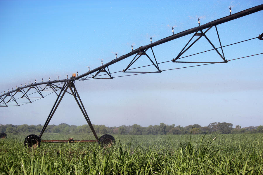 xcel-wobbler-top-sugar-cane.jpg