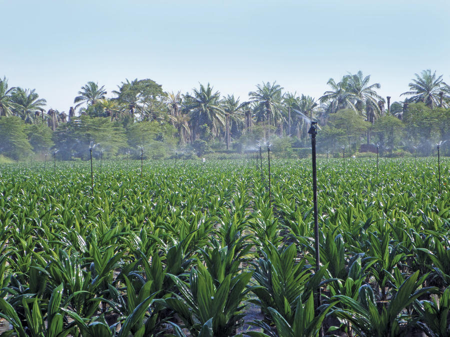 xcel-wobblers-oil-palm-irrigation.jpg