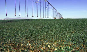 LEPA Close Spacing – alfalfa – Arizona, California, USA