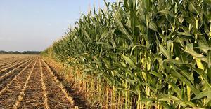 i-Wob2 – corn – Australia