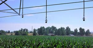 i-Wob2 – corn – Idaho, USA