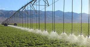 LEPA Close Spacing – alfalfa – Nevada, USA