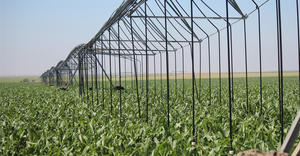 LEPA Close Spacing – corn – Kansas, USA