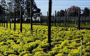 Webinar about the basics of setting up a nursery irrigation system