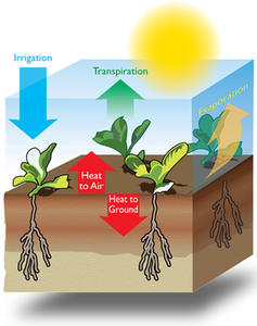 Irrigation can be used to cool crops and soil
