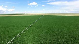 Pivot with Senninger sprinklers over corn