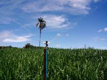 30 Series Impact Sprinkler - Sugarcane