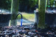 Blue Pot Stake