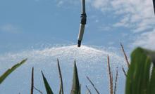 End Spray - Corn