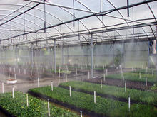 Fogger - Greenhouse