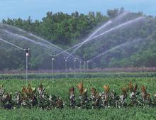 7025 Impact Sprinklers