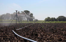 80 Series Impact Sprinklers - Sugarcane Germination