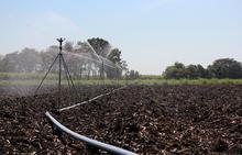 80 Series Impact Sprinklers - Sugarcane Germination