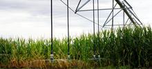 Senninger LDN corn