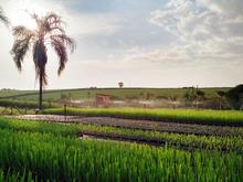 mini-Wobbler - Sugarcane